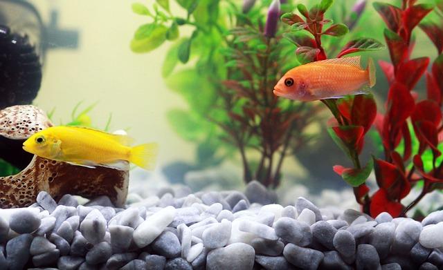 Jak kontrolować przepełnione akwarium?