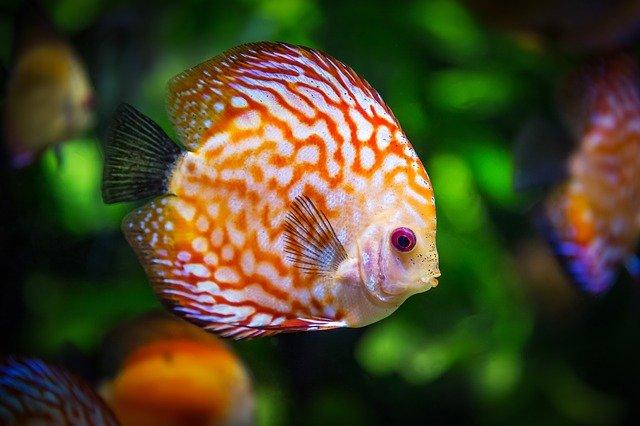 Typy ryb czyszczących wodę w akwarium