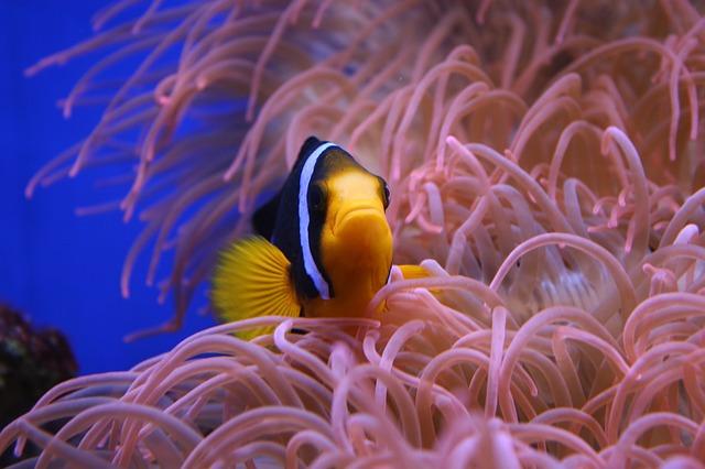 Ochrona rybek w akwarium przed chorobami