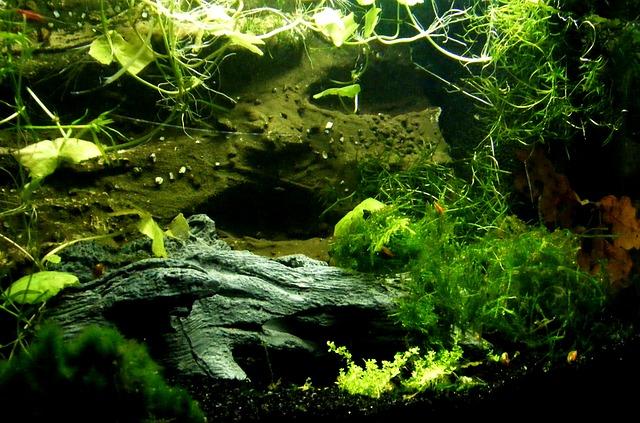 Podstawy pielęgnacji roślin w akwarium