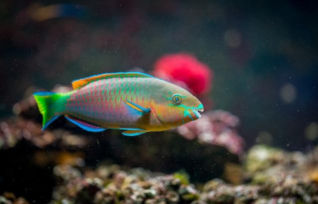 Akwarium zimnowodne, jeden z najbardziej powszechnych typów akwariów